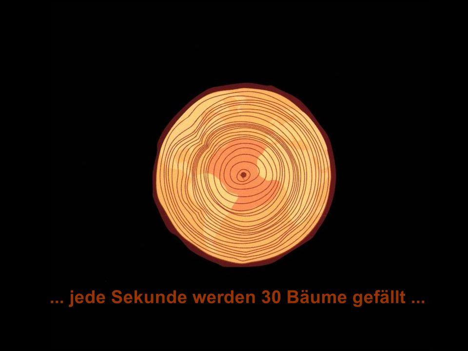 ÖFFENTLICHKEITSBETEILIGUNG www.transportlearning.net... jede Sekunde werden 30 Bäume gefällt...