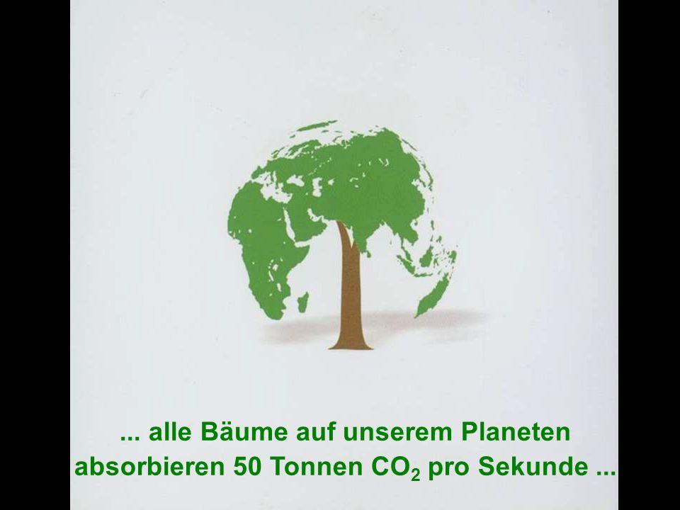 ÖFFENTLICHKEITSBETEILIGUNG www.transportlearning.net... alle Bäume auf unserem Planeten absorbieren 50 Tonnen CO 2 pro Sekunde...