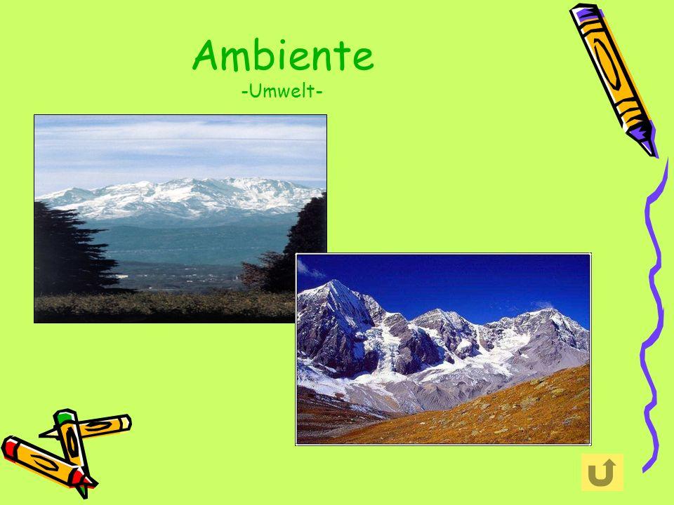 Ambiente -Umwelt-