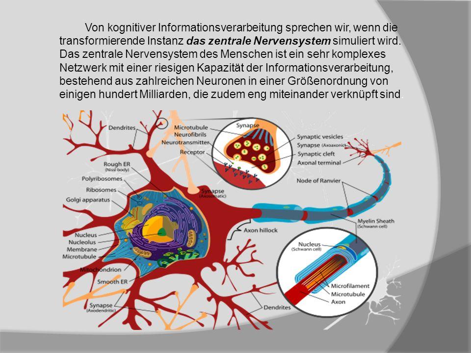 Von kognitiver Informationsverarbeitung sprechen wir, wenn die transformierende Instanz das zentrale Nervensystem simuliert wird. Das zentrale Nervens