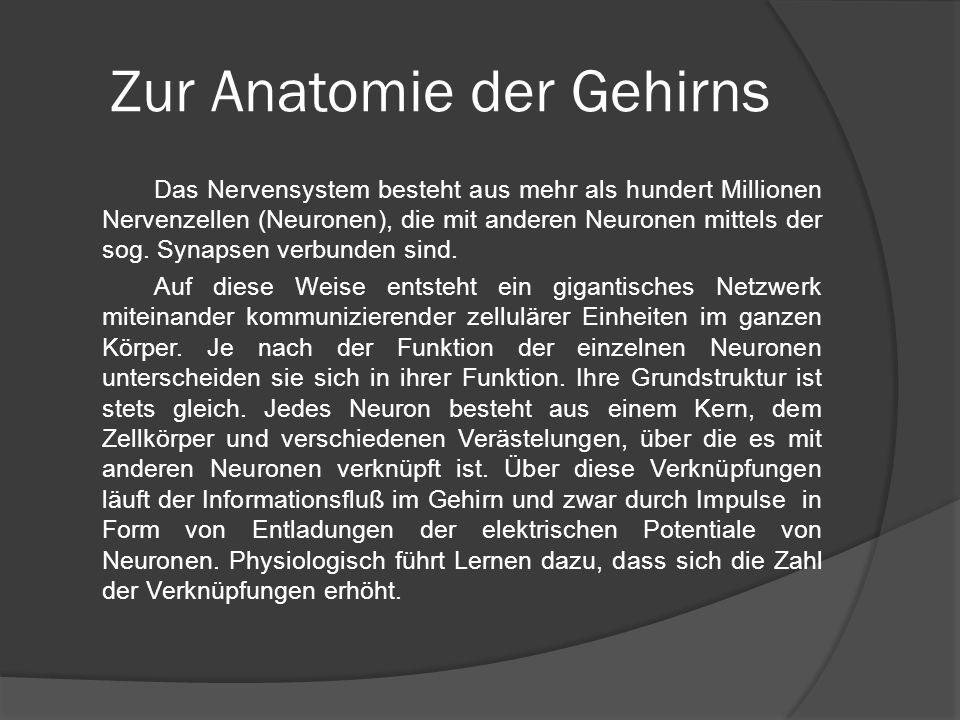 Zur Anatomie der Gehirns Das Nervensystem besteht aus mehr als hundert Millionen Nervenzellen (Neuronen), die mit anderen Neuronen mittels der sog. Sy
