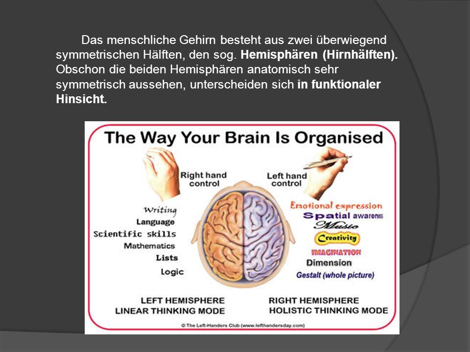 Das menschliche Gehirn besteht aus zwei überwiegend symmetrischen Hälften, den sog. Hemisphären (Hirnhälften). Obschon die beiden Hemisphären anatomis