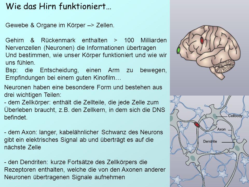 Wie das Hirn funktioniert… Gewebe & Organe im Körper –> Zellen. Gehirn & Rückenmark enthalten > 100 Milliarden Nervenzellen (Neuronen) die Information