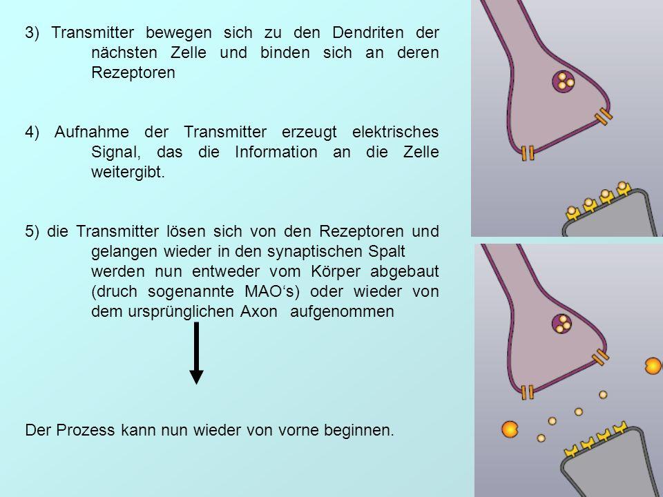 3) Transmitter bewegen sich zu den Dendriten der nächsten Zelle und binden sich an deren Rezeptoren 4) Aufnahme der Transmitter erzeugt elektrisches S