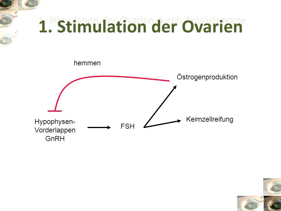 1. Stimulation der Ovarien durch Antiöstrogene Hypophysen- Vorderlappen GnRH FSH Keimzellreifung Östrogenproduktion hemmen 1. Stimulation der Ovarien