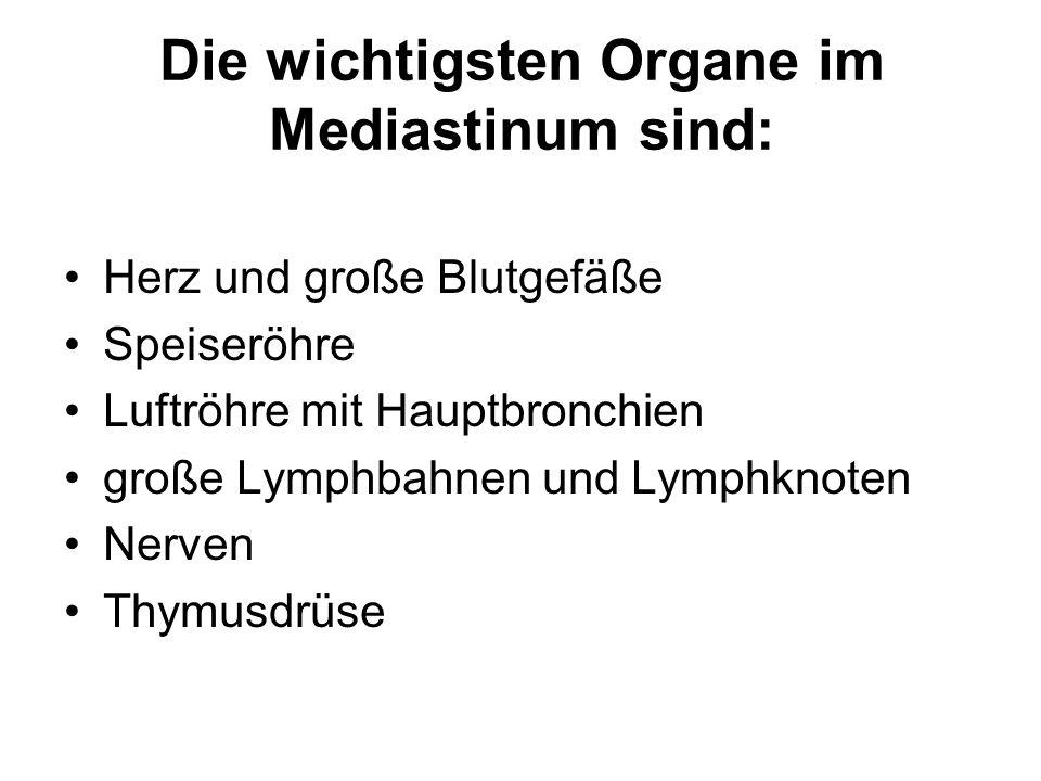 Thymus Der Thymus ist ein primäres lymphatisches Organ.
