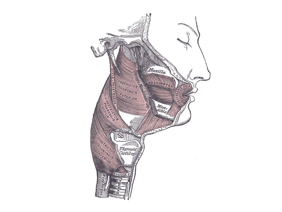 Rectum Der Mastdarm (lateinisch (Intestinum) Rectum, der gerade Darm) ist ein Teil des Enddarms und damit des Dickdarms und dient zum Lagern des Kots, d.