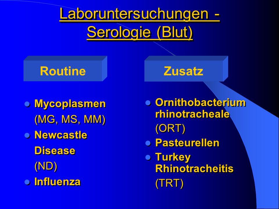 Laboruntersuchungen - Serologie (Blut) Mycoplasmen (MG, MS, MM) Newcastle Disease (ND) Influenza Mycoplasmen (MG, MS, MM) Newcastle Disease (ND) Influ