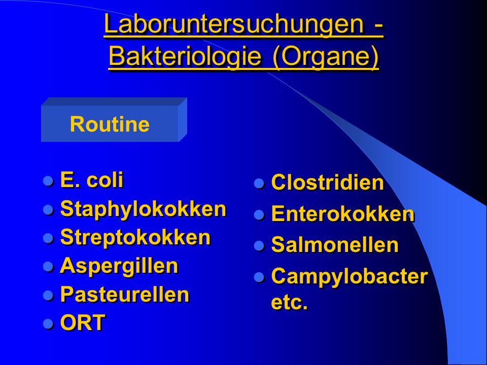 Laboruntersuchungen - Bakteriologie (Organe) E. coli Staphylokokken Streptokokken Aspergillen Pasteurellen ORT E. coli Staphylokokken Streptokokken As