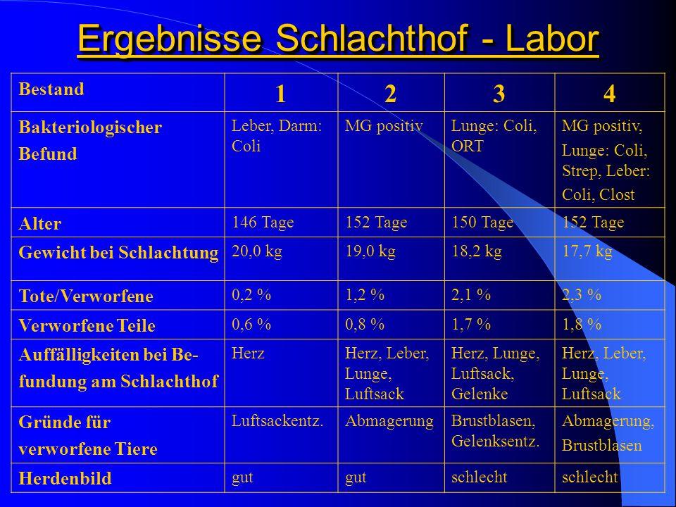 Ergebnisse Schlachthof - Labor Bestand 1234 Bakteriologischer Befund Leber, Darm: Coli MG positivLunge: Coli, ORT MG positiv, Lunge: Coli, Strep, Lebe