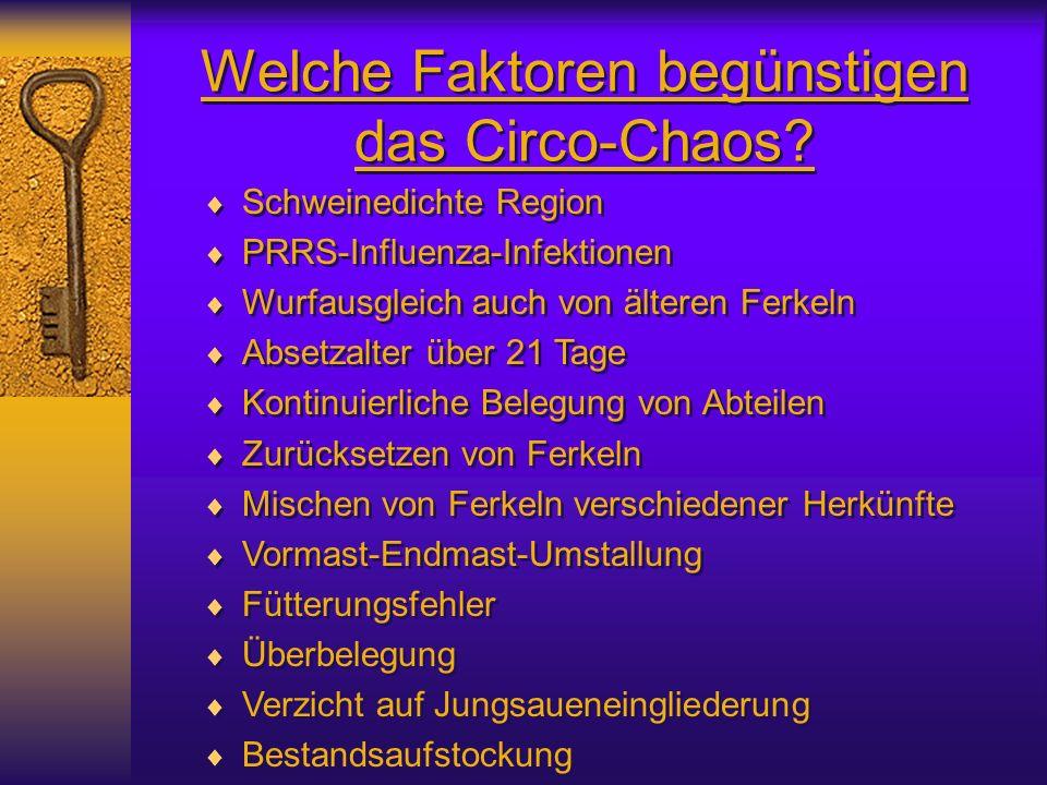 Welche Faktoren begünstigen das Circo-Chaos? Schweinedichte Region PRRS-Influenza-Infektionen Wurfausgleich auch von älteren Ferkeln Absetzalter über