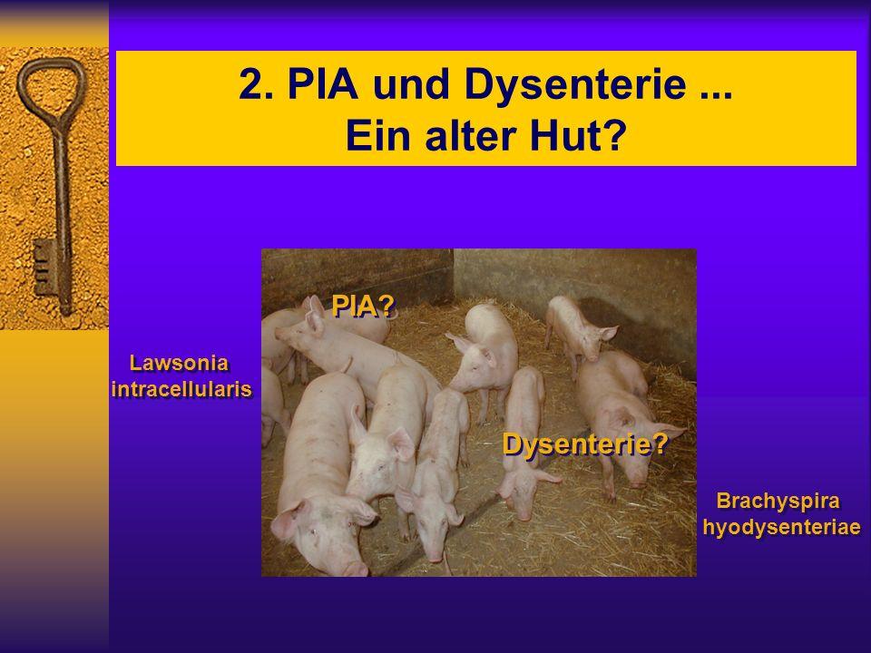 2. PIA und Dysenterie... Ein alter Hut? Lawsonia intracellularis Lawsonia intracellularis Dysenterie? PIA? Brachyspira hyodysenteriae Brachyspira hyod