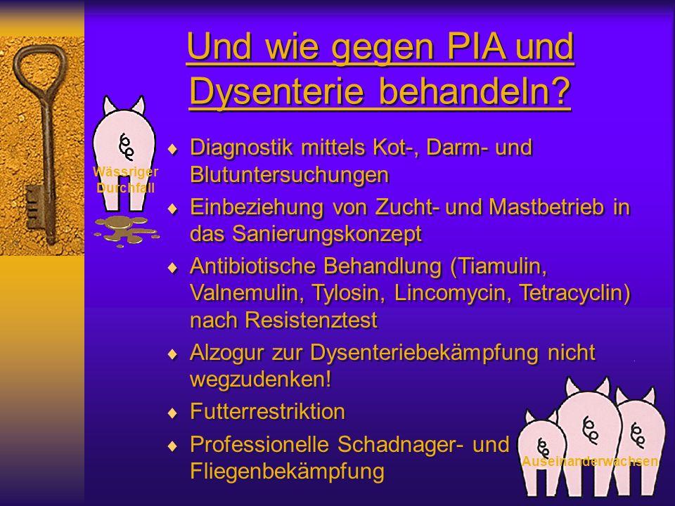 Und wie gegen PIA und Dysenterie behandeln? Wässriger Durchfall Auseinanderwachsen Diagnostik mittels Kot-, Darm- und Blutuntersuchungen Einbeziehung