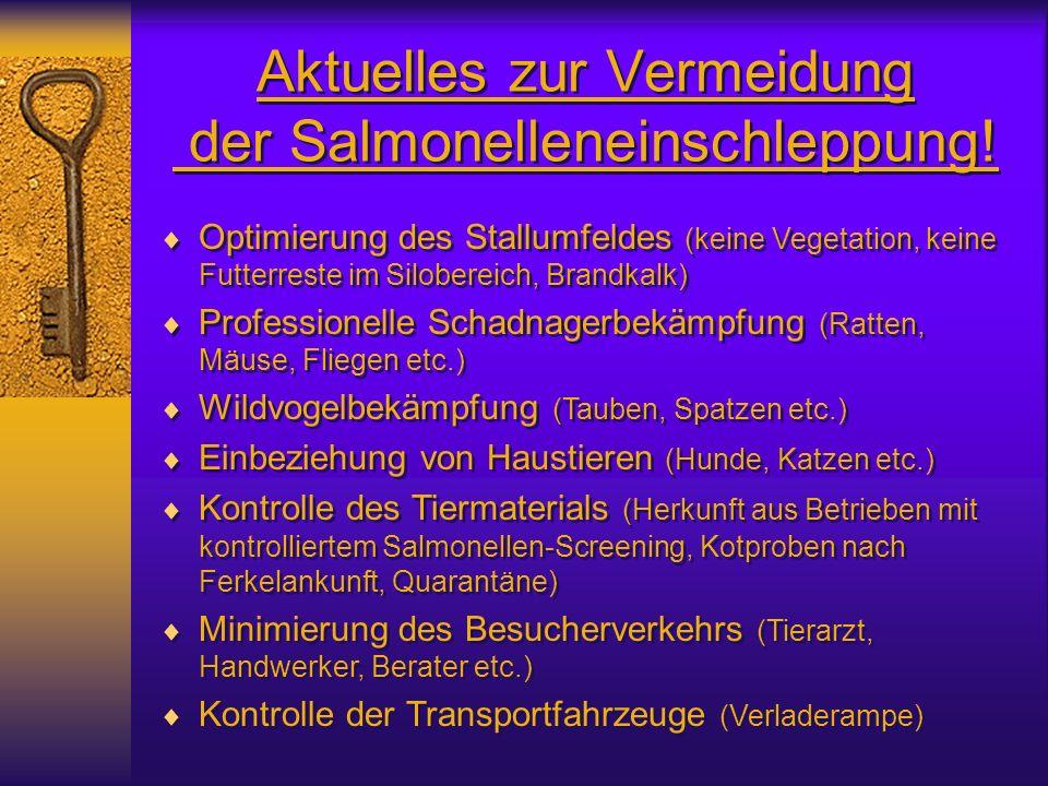 Aktuelles zur Vermeidung der Salmonelleneinschleppung! Optimierung des Stallumfeldes (keine Vegetation, keine Futterreste im Silobereich, Brandkalk) P
