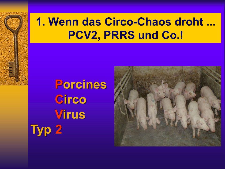 1. Wenn das Circo-Chaos droht... PCV2, PRRS und Co.! Porcines Circo Virus Typ 2 Porcines Circo Virus Typ 2