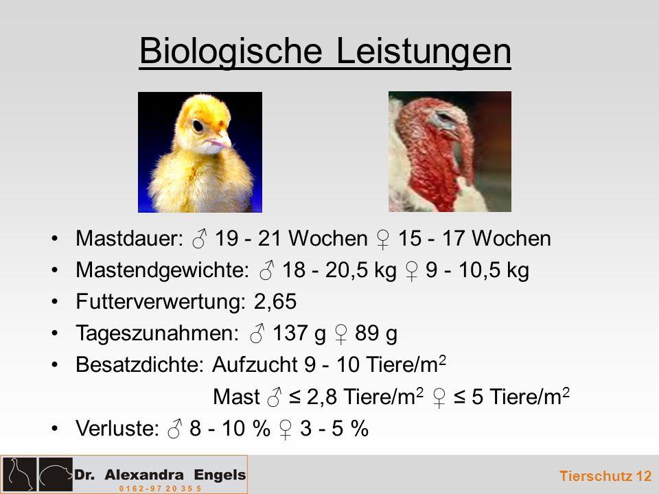 Biologische Leistungen Tierschutz 12 Mastdauer: 19 - 21 Wochen 15 - 17 Wochen Mastendgewichte: 18 - 20,5 kg 9 - 10,5 kg Futterverwertung: 2,65 Tageszu