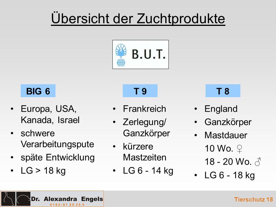 Übersicht der Zuchtprodukte Tierschutz 18 Europa, USA, Kanada, Israel schwere Verarbeitungspute späte Entwicklung LG > 18 kg Frankreich Zerlegung/ Gan