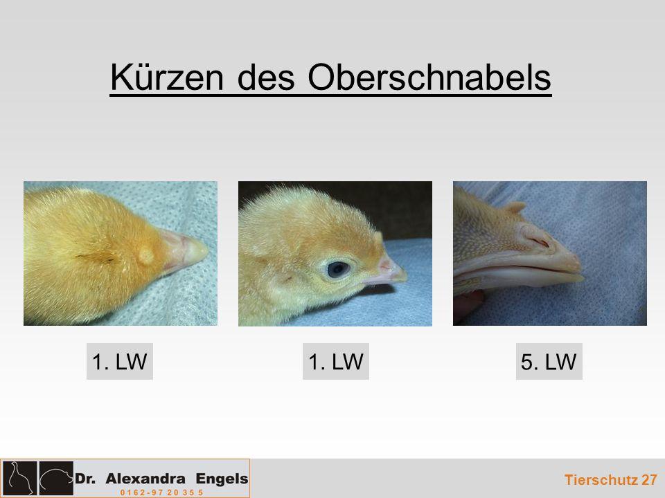 Kürzen des Oberschnabels Tierschutz 27 1. LW 5. LW
