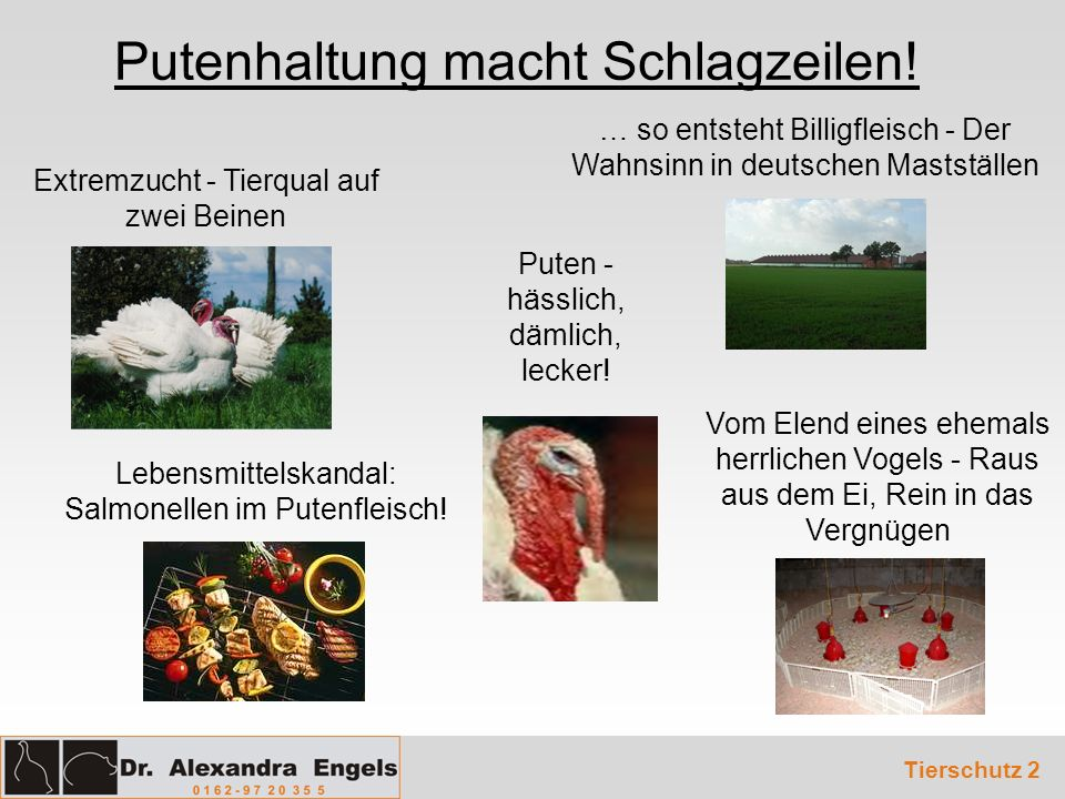 Lebensmittelskandal: Salmonellen im Putenfleisch! Extremzucht - Tierqual auf zwei Beinen Putenhaltung macht Schlagzeilen! Puten - hässlich, dämlich, l