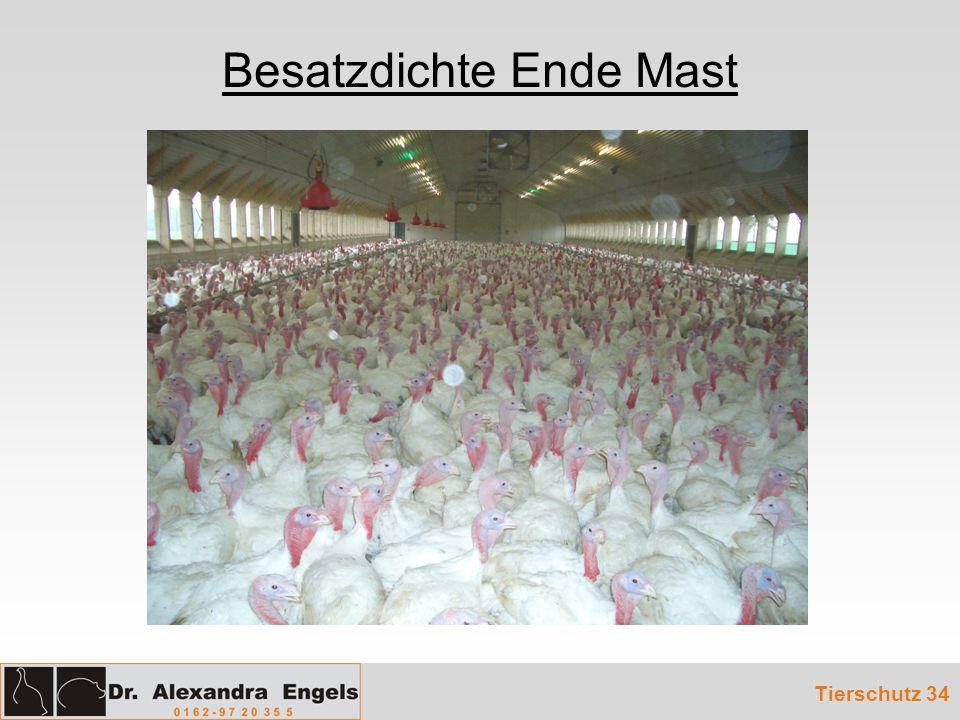 Besatzdichte Ende Mast Tierschutz 34