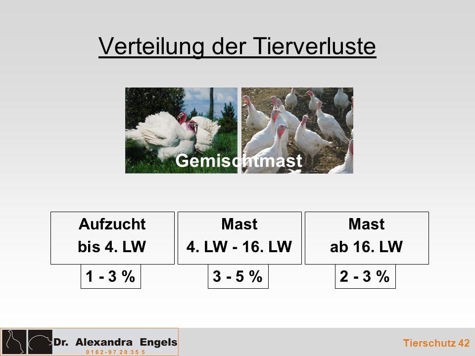Verteilung der Tierverluste Tierschutz 42 Mast 4. LW - 16. LW Mast ab 16. LW Aufzucht bis 4. LW Gemischtmast 1 - 3 %3 - 5 %2 - 3 %