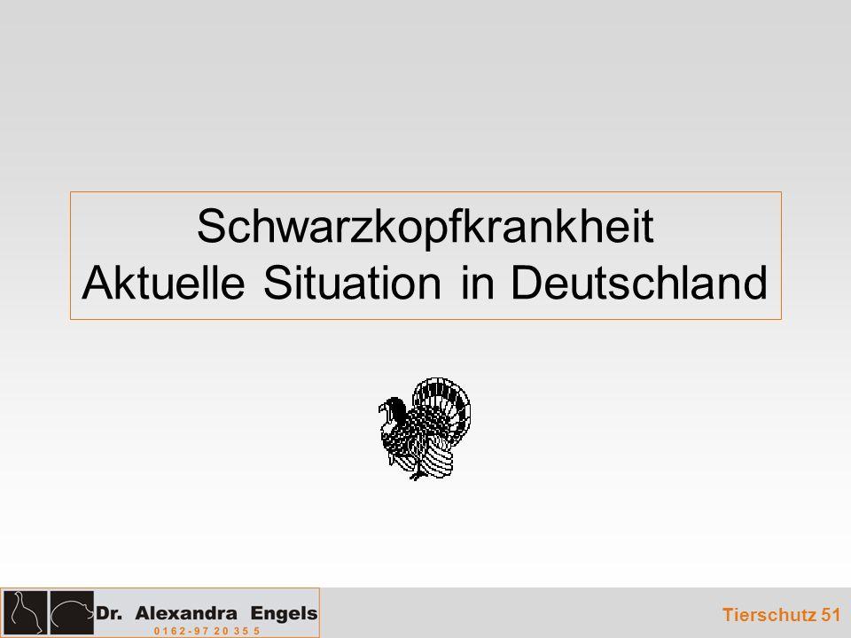 Schwarzkopfkrankheit Aktuelle Situation in Deutschland Tierschutz 51