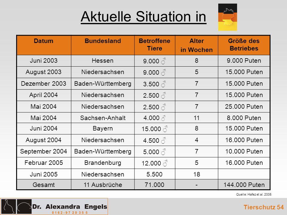 Aktuelle Situation in DatumBundeslandBetroffene Tiere Alter in Wochen Größe des Betriebes Juni 2003Hessen 9.000 89.000 Puten August 2003Niedersachsen