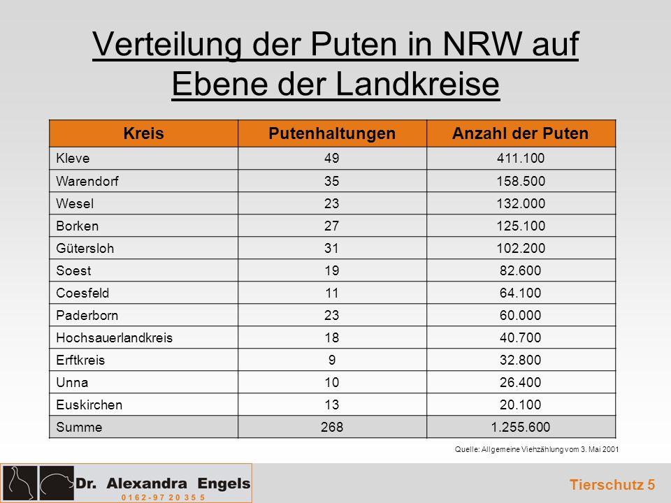 Verteilung der Puten in NRW auf Ebene der Landkreise Quelle: Allgemeine Viehzählung vom 3. Mai 2001 Tierschutz 5 KreisPutenhaltungenAnzahl der Puten K