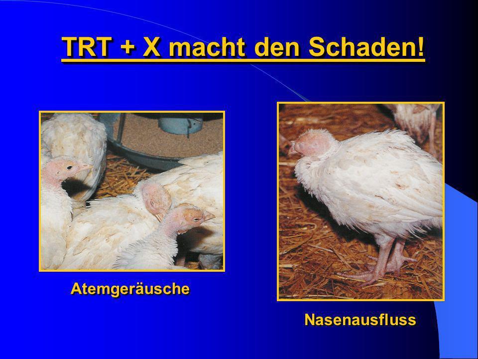 TRT + X macht den Schaden! Atemgeräusche Nasenausfluss