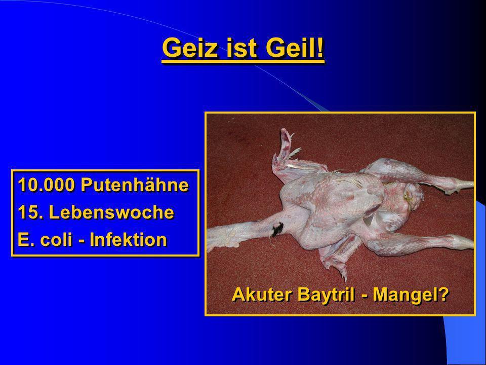 Geiz ist Geil! 10.000 Putenhähne 15. Lebenswoche E. coli - Infektion 10.000 Putenhähne 15. Lebenswoche E. coli - Infektion Akuter Baytril - Mangel?