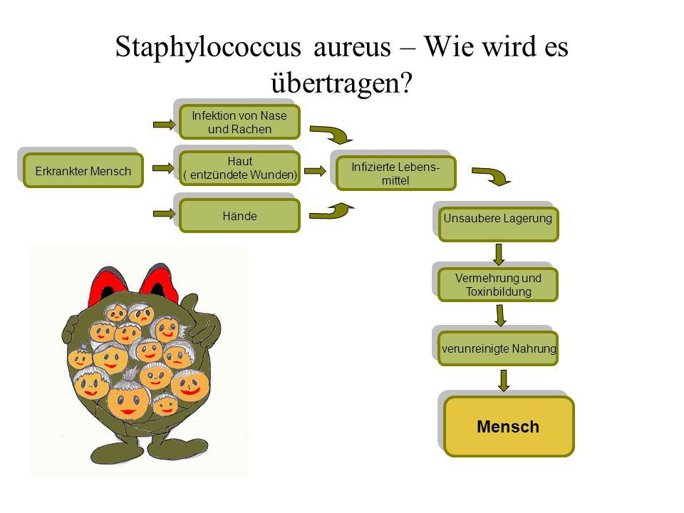 Mensch Unsaubere Lagerung Vermehrung und Toxinbildung Vermehrung und Toxinbildung Erkrankter Mensch Infizierte Lebens- mittel Infizierte Lebens- mitte