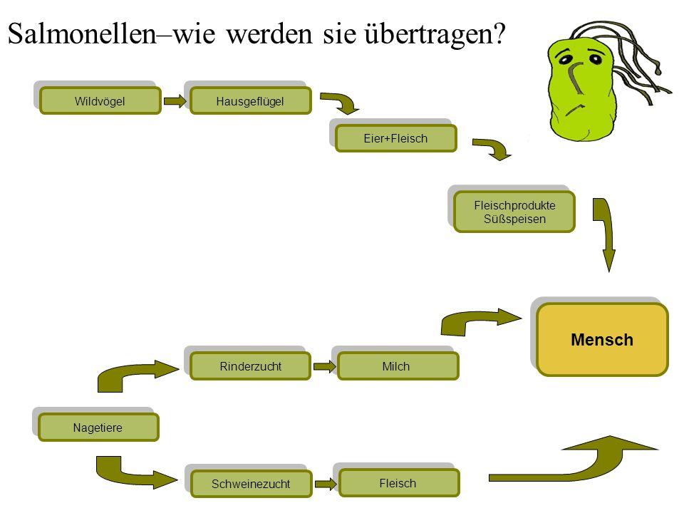Lebenszyklus der Trichinen