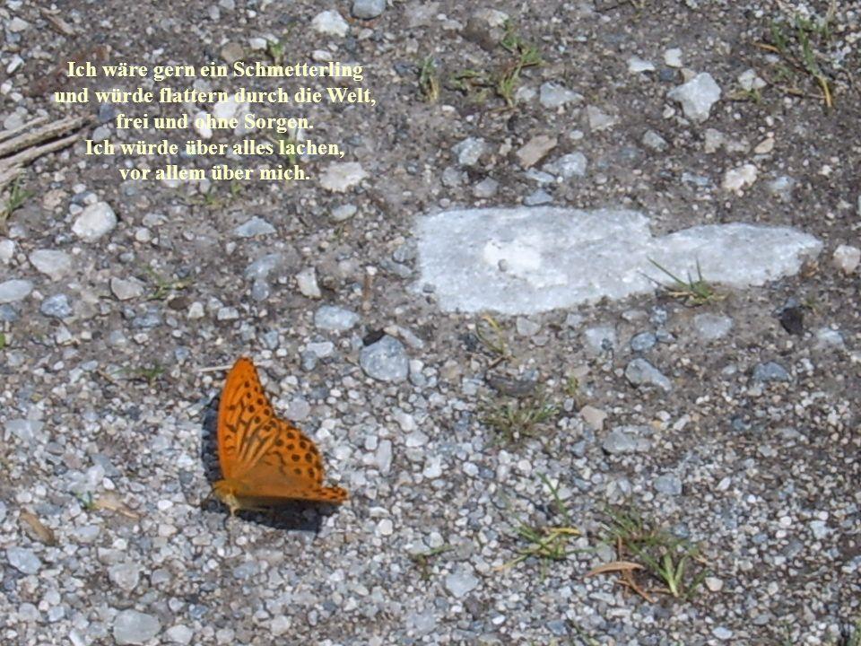 Ich wäre gern ein Schmetterling und würde flattern durch die Welt, frei und ohne Sorgen. Ich würde über alles lachen, vor allem über mich.