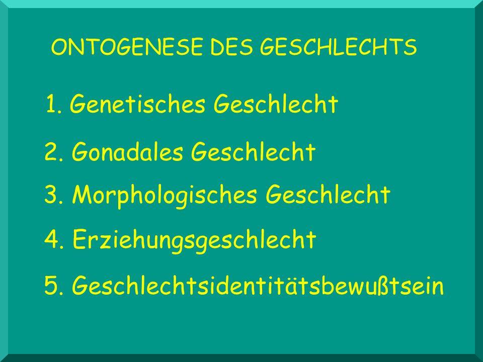 ONTOGENESE DES GESCHLECHTS 1. Genetisches Geschlecht 2. Gonadales Geschlecht 3. Morphologisches Geschlecht 4. Erziehungsgeschlecht 5. Geschlechtsident