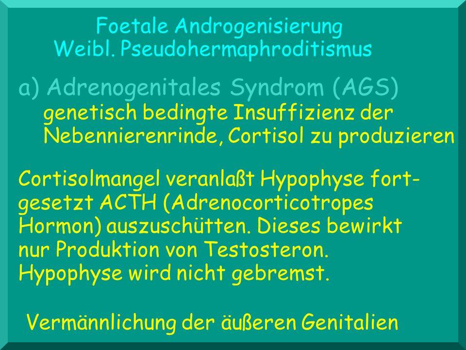 Foetale Androgenisierung Weibl. Pseudohermaphroditismus Cortisolmangel veranlaßt Hypophyse fort- gesetzt ACTH (Adrenocorticotropes Hormon) auszuschütt