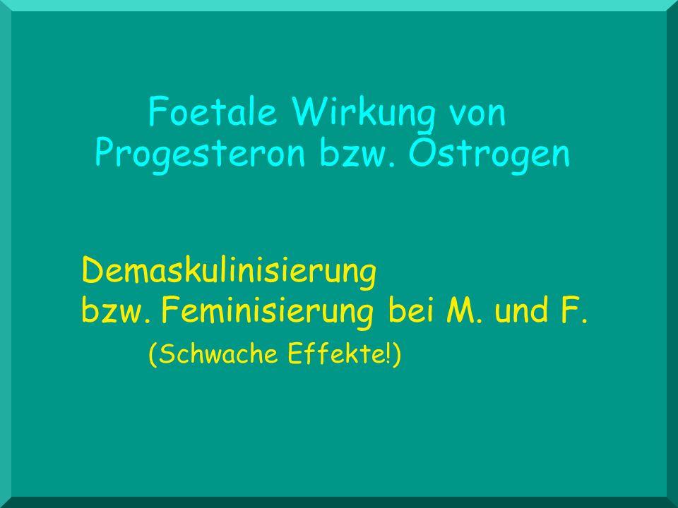 Foetale Wirkung von Progesteron bzw. Östrogen Demaskulinisierung bzw. Feminisierung bei M. und F. (Schwache Effekte!)