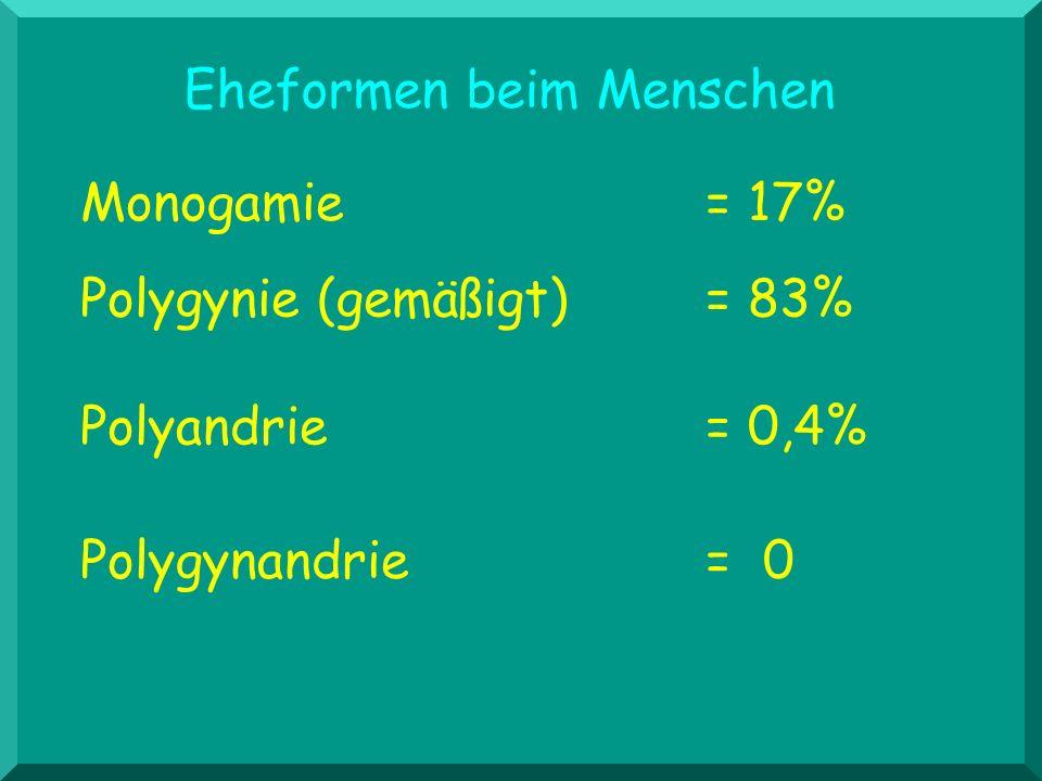 Eheformen beim Menschen Monogamie = 17% Polygynie (gemäßigt) = 83% Polygynandrie= 0 Polyandrie = 0,4%