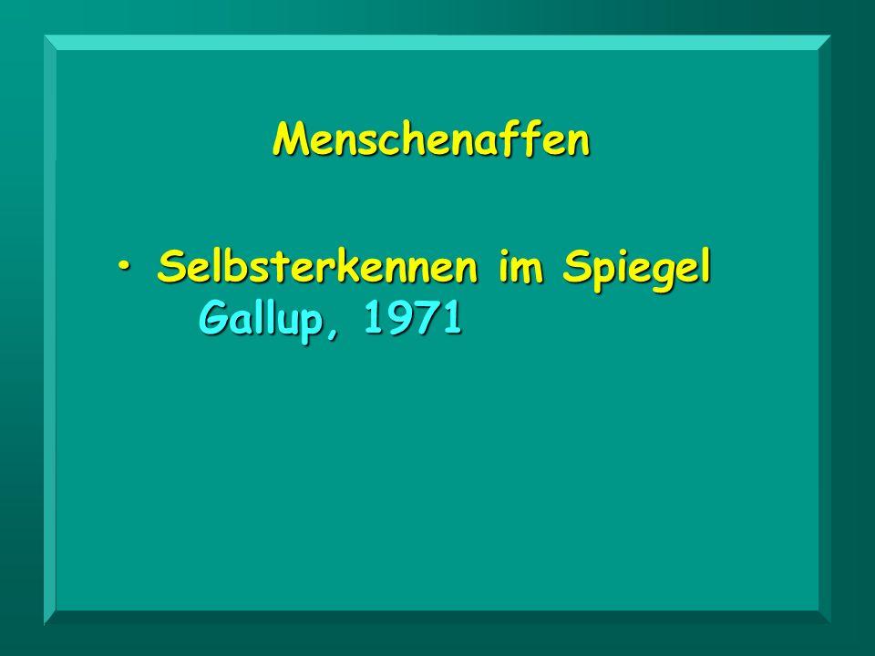 Menschenaffen Selbsterkennen im Spiegel Selbsterkennen im Spiegel Gallup, 1971