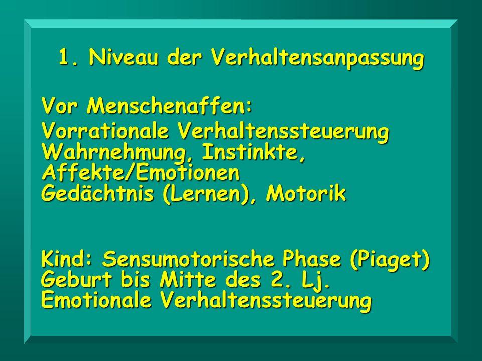 1. Niveau der Verhaltensanpassung Kind: Sensumotorische Phase (Piaget) Geburt bis Mitte des 2. Lj. Emotionale Verhaltenssteuerung Vor Menschenaffen: V