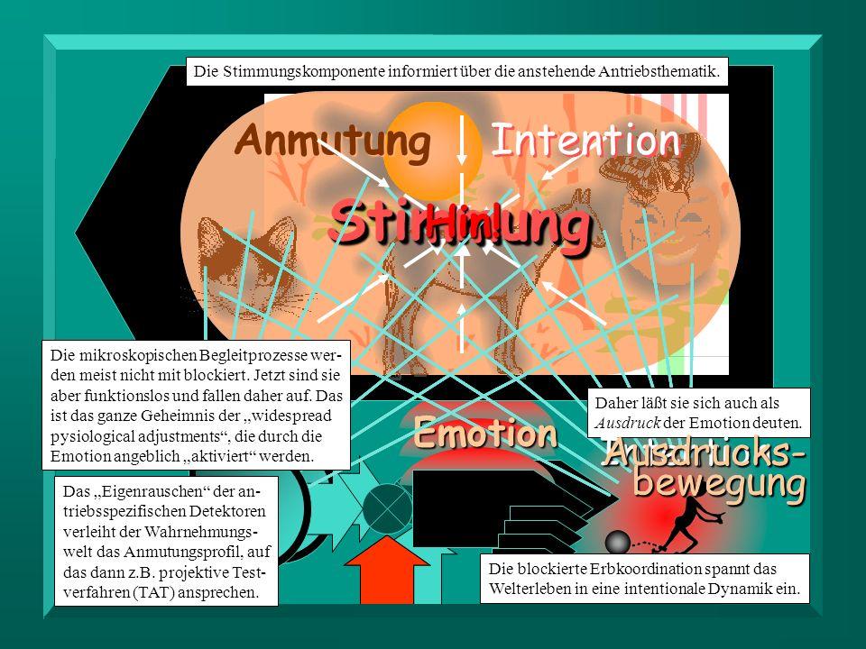 Anmutung StimmungStimmung Intention Emotion Die Stimmungskomponente informiert über die anstehende Antriebsthematik. Die blockierte Erbkoordination sp