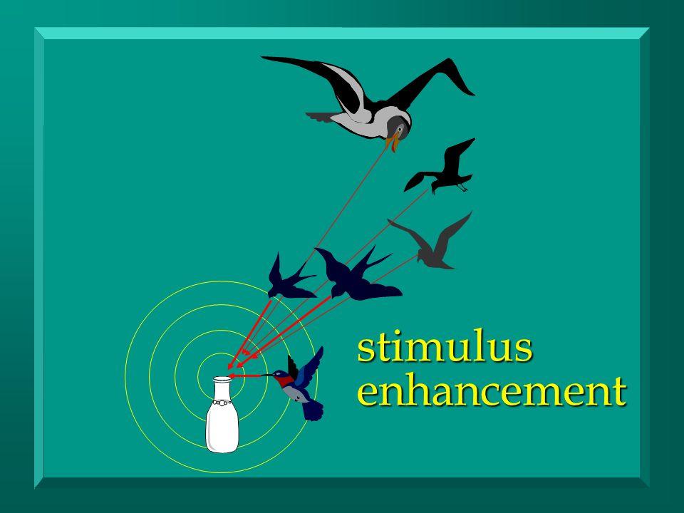 stimulusenhancement