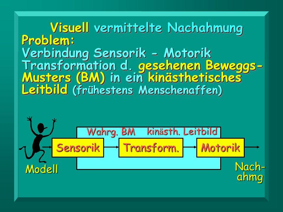 Visuell vermittelte Nachahmung Problem: Verbindung Sensorik - Motorik Transformation d. gesehenen Beweggs- Musters (BM) in ein kinästhetisches Leitbil