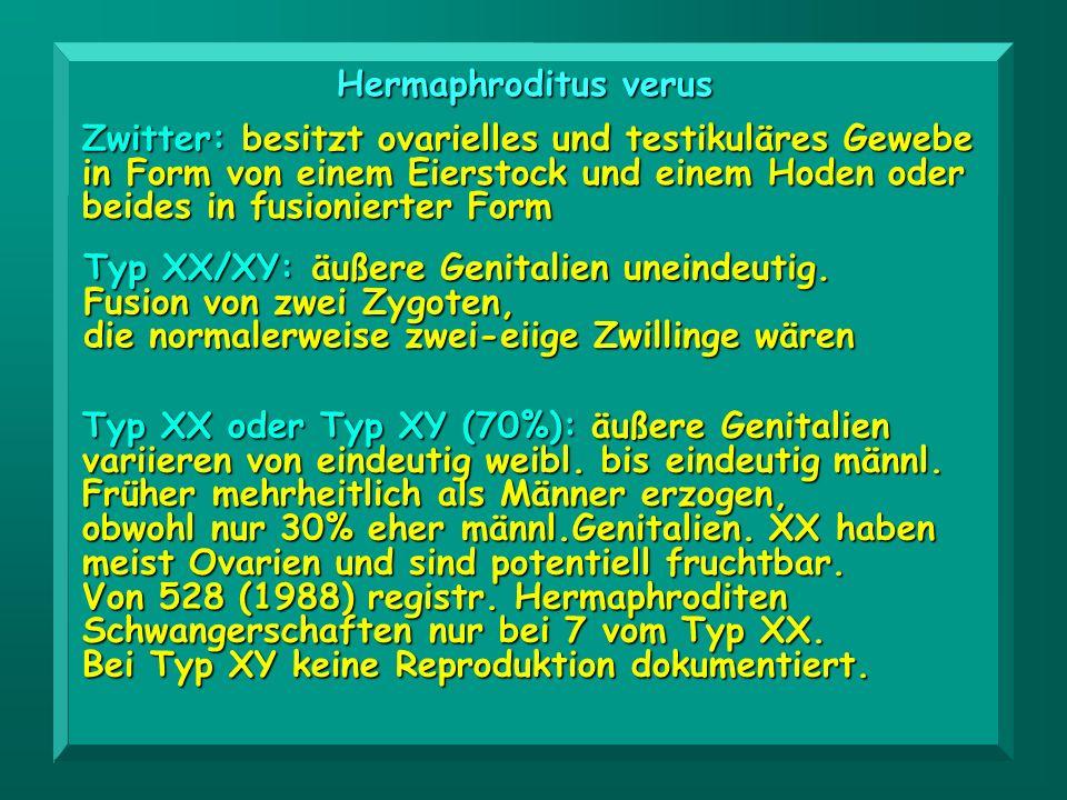 Typ XX/XY: äußere Genitalien uneindeutig. Fusion von zwei Zygoten, die normalerweise zwei-eiige Zwillinge wären Typ XX oder Typ XY (70%): äußere Genit