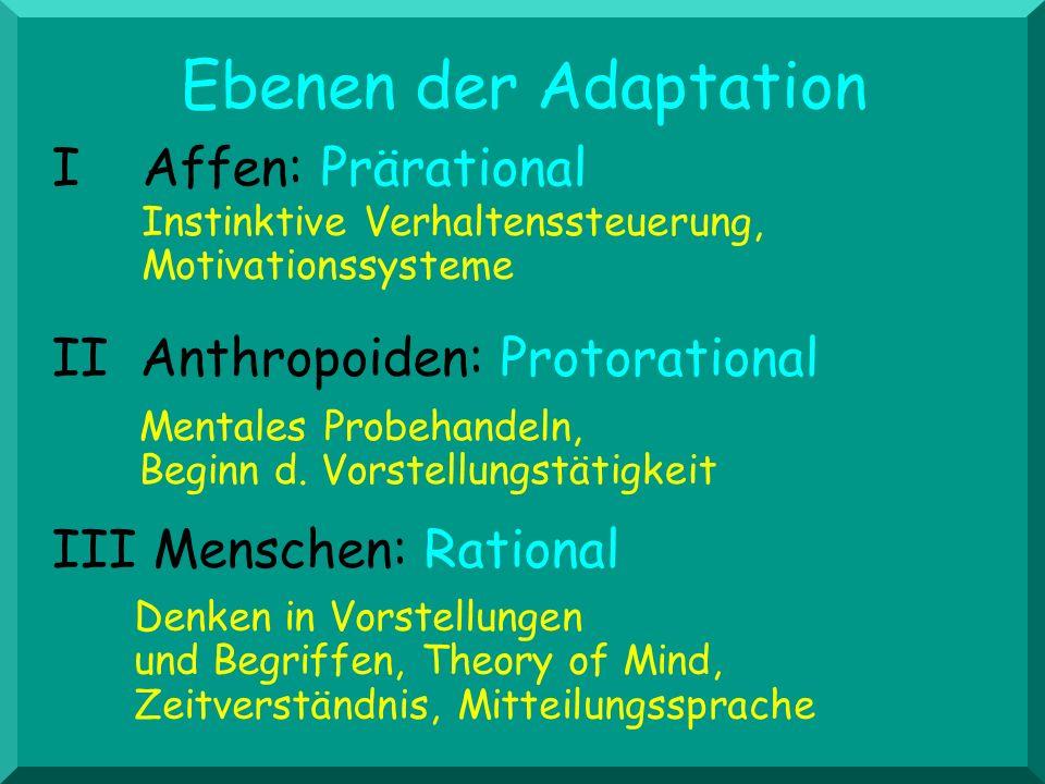 III Menschen: Rational II Anthropoiden: Protorational I Affen: Prärational Instinktive Verhaltenssteuerung, Motivationssysteme Mentales Probehandeln,