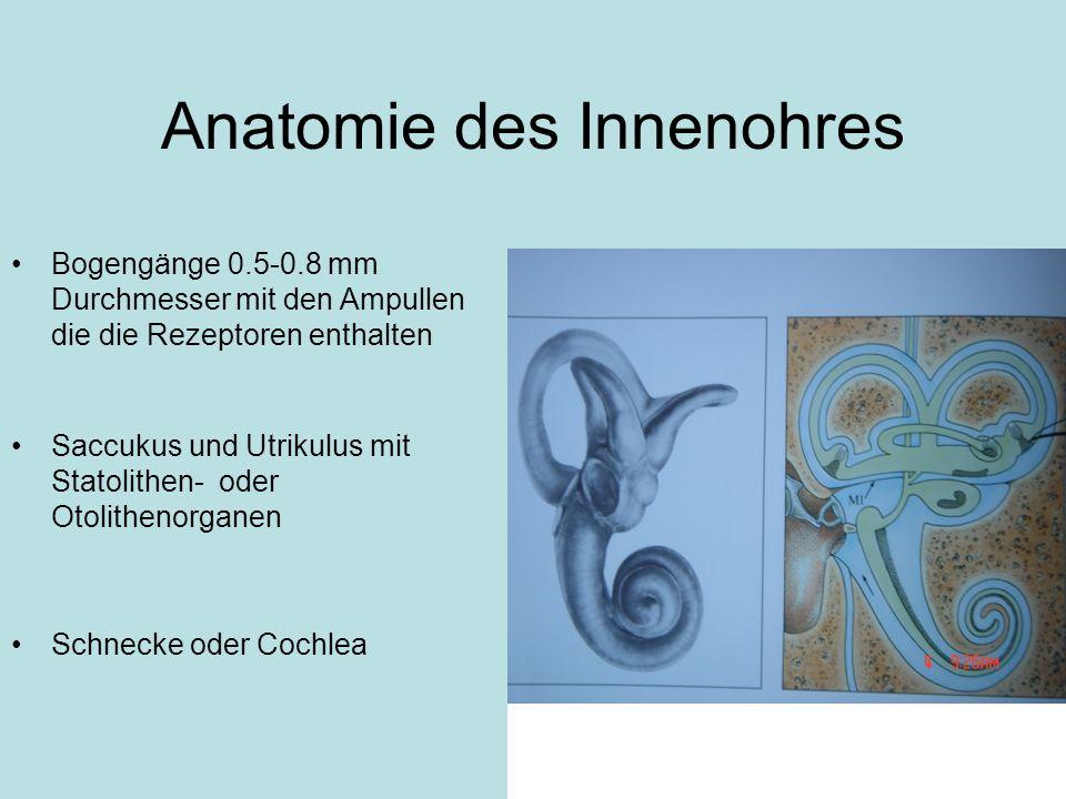 Anatomie des Innenohres Bogengänge 0.5-0.8 mm Durchmesser mit den Ampullen die die Rezeptoren enthalten Saccukus und Utrikulus mit Statolithen- oder O
