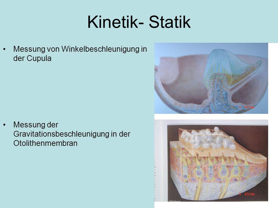 Periphere vestibuläre Gleichgewichtsstörungen Anfalls- oder Attackenschwindel Ausfall- oder Dauerschwindel Lagerungsschwindel