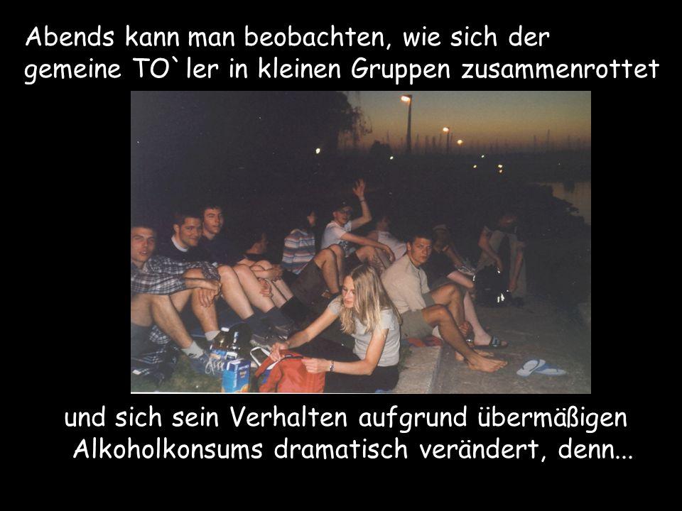 Abends kann man beobachten, wie sich der gemeine TO`ler in kleinen Gruppen zusammenrottet und sich sein Verhalten aufgrund übermäßigen Alkoholkonsums
