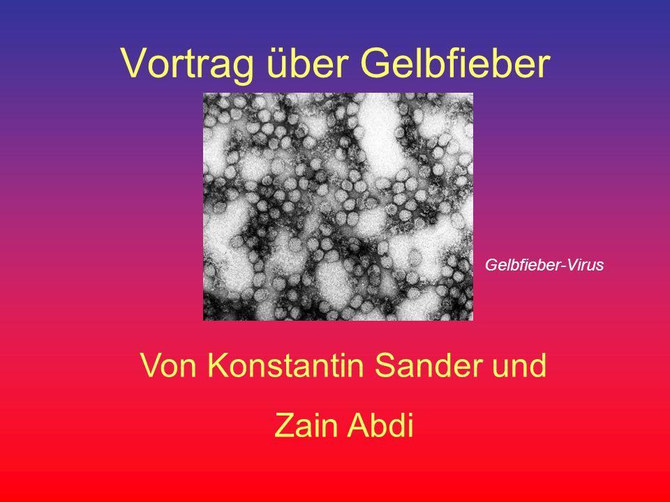 Vortrag über Gelbfieber Von Konstantin Sander und Zain Abdi Gelbfieber-Virus