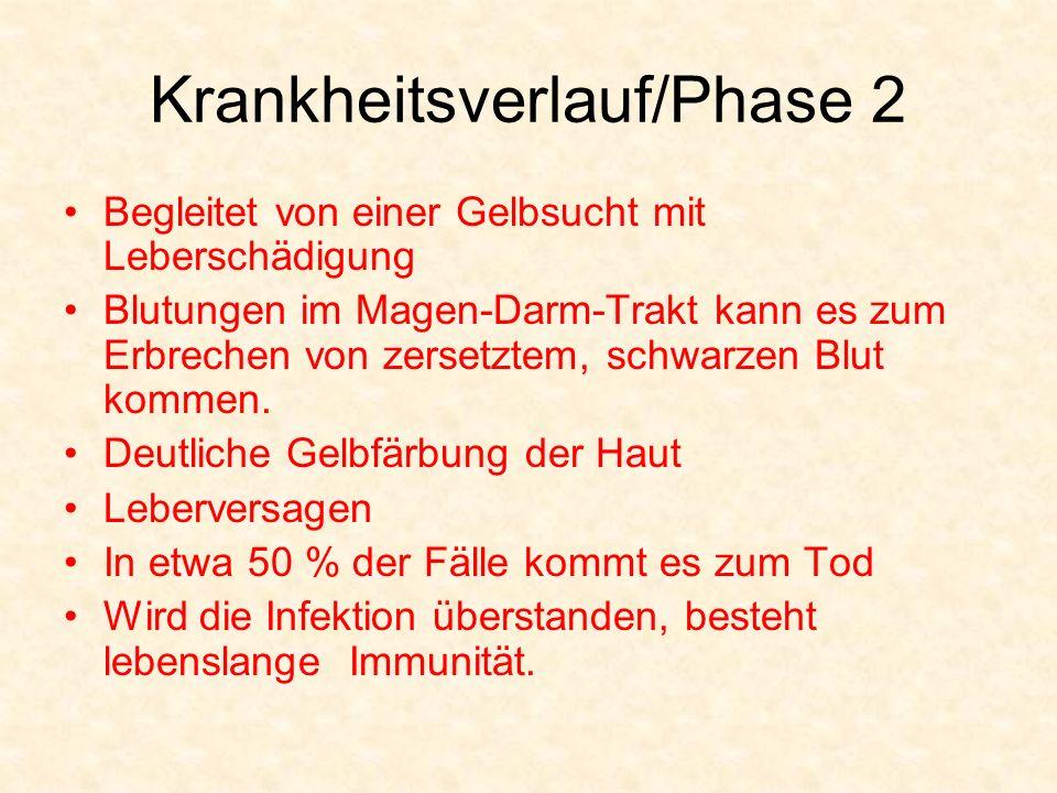 Krankheitsverlauf/Phase 2 Begleitet von einer Gelbsucht mit Leberschädigung Blutungen im Magen-Darm-Trakt kann es zum Erbrechen von zersetztem, schwar