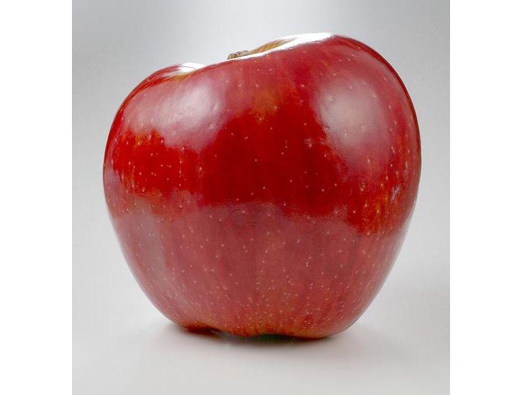 Der Stiel ist oben am Apfel.